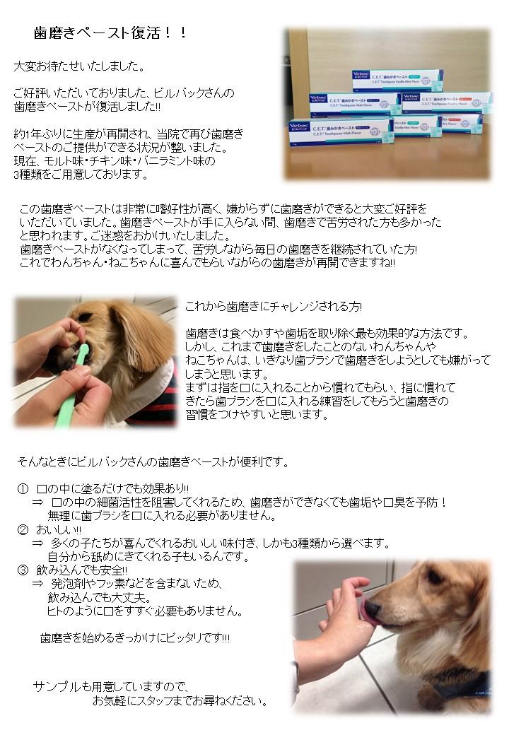 歯磨きペースト復活